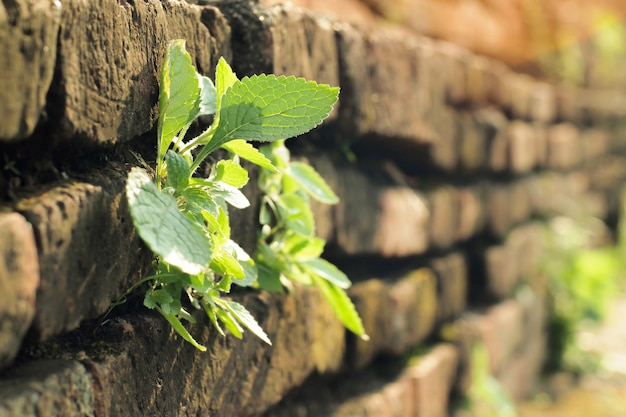 Plant on brick wall