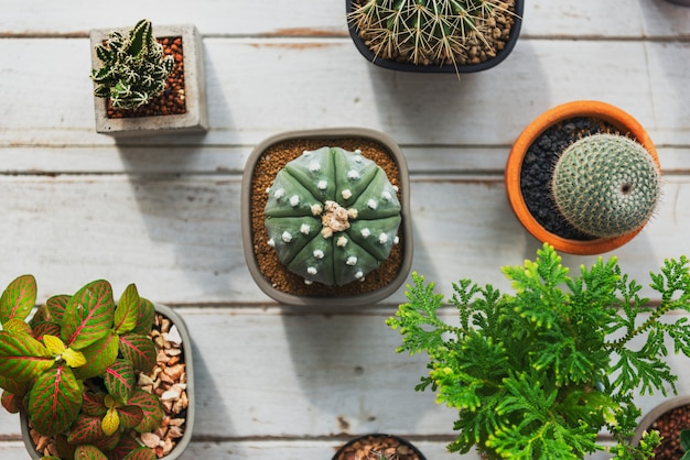 Plant cactus houseplant nature concept