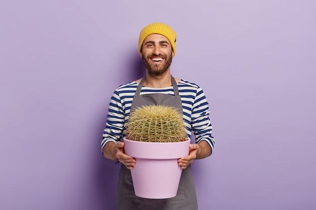 Concetto di cura delle piante. giardiniere maschio felice tiene vaso con cactus, vestito con maglione a righe e grembiule, essendo di buon umore