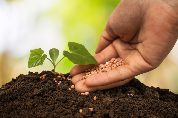 Plant care and fertilize the trees.