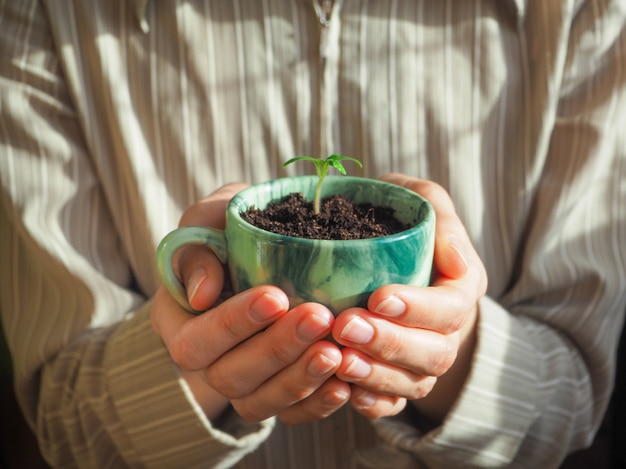 Plant in a coffee cup in woman hands.