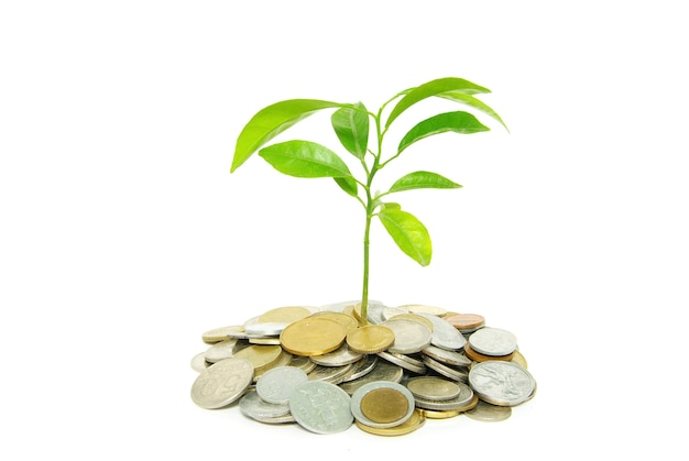Plant in coins  isolated