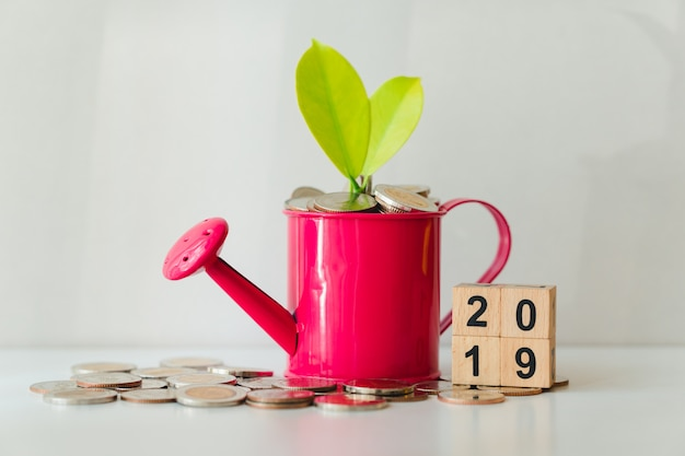 Plant and coins in watering can with year 2019 using as financial growth and business concept