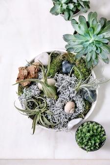 ティランジアの空気、コケ、さまざまな多肉植物のエオニウム、白い大理石のテーブルの上のセラミックポットのサボテンとの植物組成。