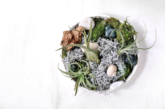 Tillandsia 공기, 이끼 및 돌 흰색 대리석 테이블과 식물 조성. 유행성 취미, 녹색 실내 식물, 도시 식물. 평면 위치, 복사 공간