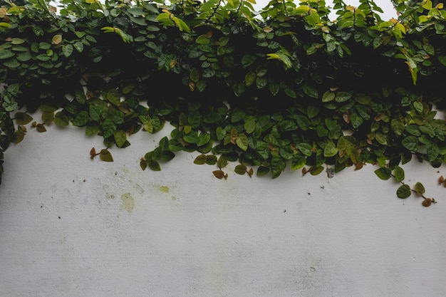Plant covering a wall