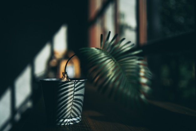 Plant decoration design in minimal style background, cup of drink on natural wood table space, modern green wall interior in a room of home cafes, hot drink and sun light in the morning