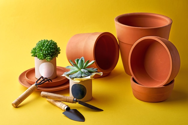 Plant for decoration in a pot. clay pots in assortment for gardening .