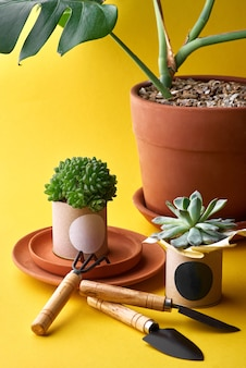 Plant for decoration in a pot. clay pots in assortment for gardening
