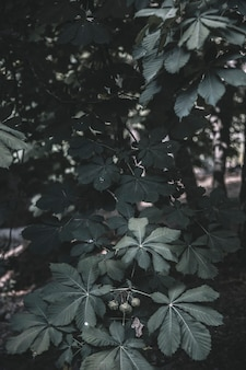 Plant in forest in daytime