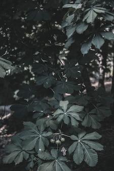 Piantare nella foresta durante il giorno