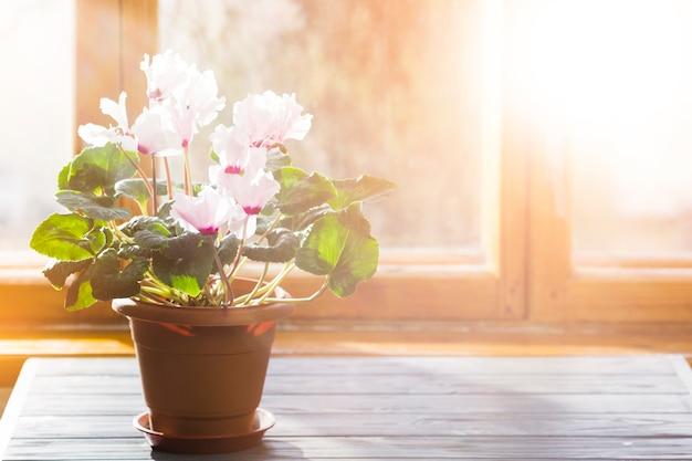 Plant and garden still life
