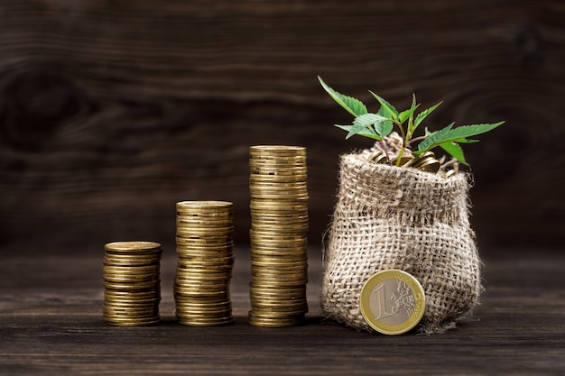 Plant growing in coins bag for money