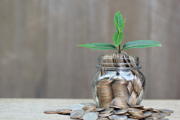 Plant growing on coins money in glass bottle on wooder background, investment and business concept