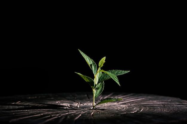 木の丸太から育つ植物