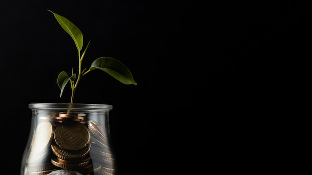 Plant growing from jar of coins with copy space