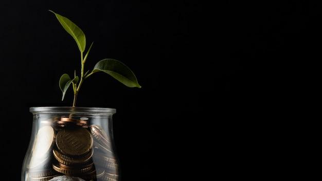 コピースペースのあるコインの瓶から成長する植物