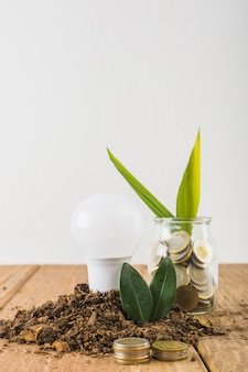 Plant growing from jar with coins