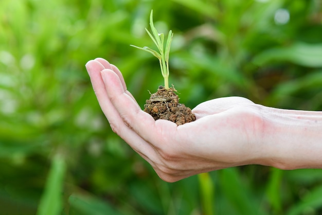 Plant growing on hand soil in hand with green young plant growing agriculture and seeding