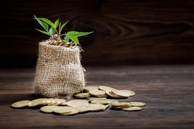 돈을 위해 동전 가방에서 성장하는 식물