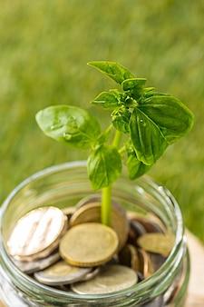Растение в стеклянной банке монет для денег против зеленой травы. сберегательные и инвестиционные финансовые