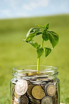 緑の芝生の上のお金のためのコインガラスの瓶で育つ植物