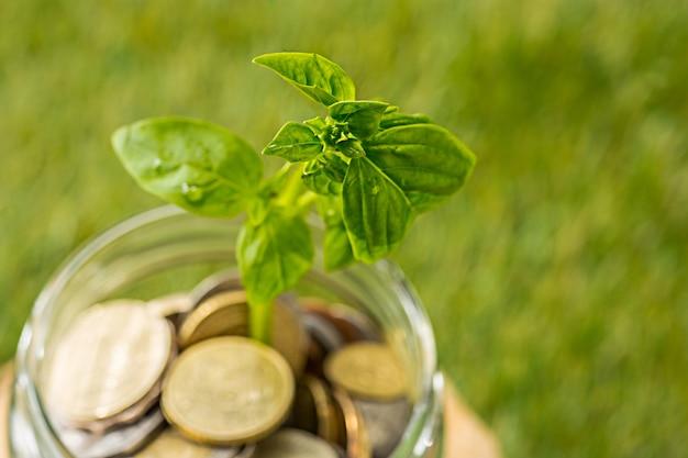 Растениеводство в монетах стеклянная банка для денег на зеленой траве