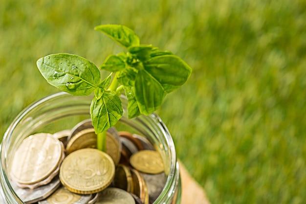 緑の芝生の上のお金のためのコインガラス瓶で育つ植物