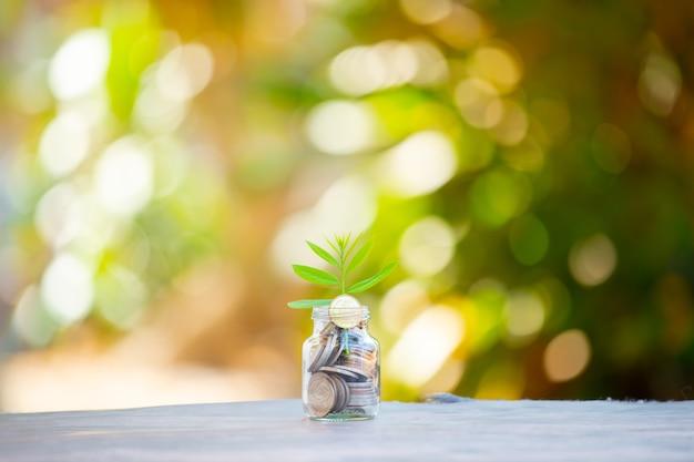 貯蓄コインで成長する植物-利息の概念