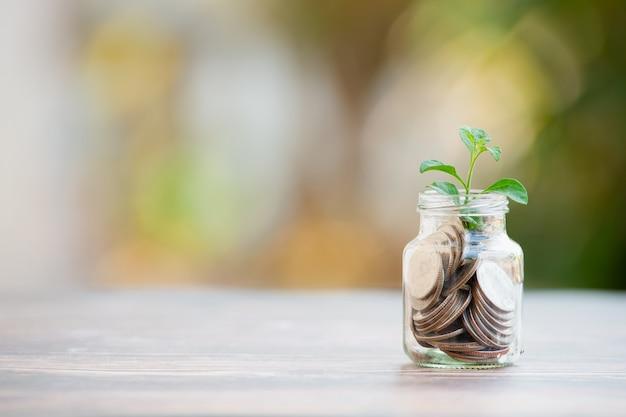 저축 동전에서 자라는 식물 - 투자 및 관심 개념