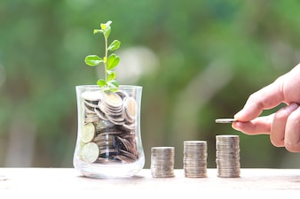Plant Growing In Savings Coins - Saving money concept