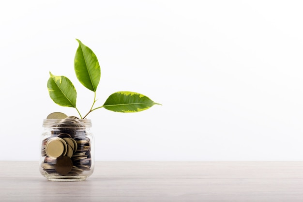 Выращивание растений в сберегательных монетах