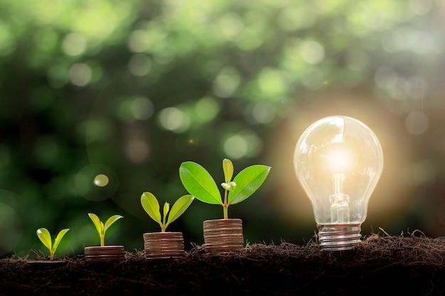동전과 전구에서 자라는 식물. 에너지 절약 전구와 나무는 자연 배경을 가진 동전 더미에서 자랍니다. 금융 돈과 에너지 절약 개념