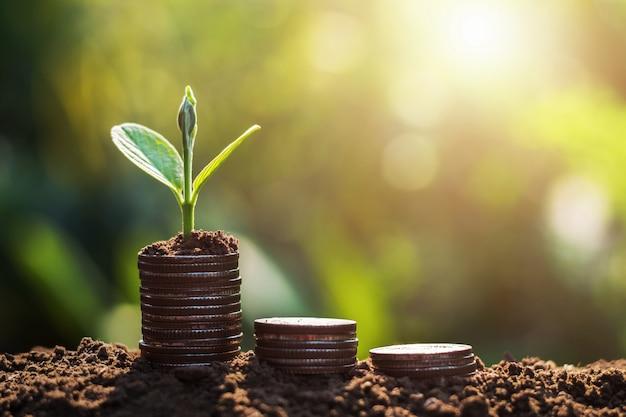 동전 햇볕 배경에 성장하는 식물. 돈을 절약 개념