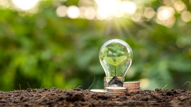 Растение на почве внутри лампочки и стопки монет с размытым фоном растительности