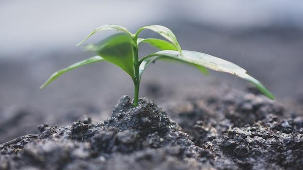 Растениеводство на земле