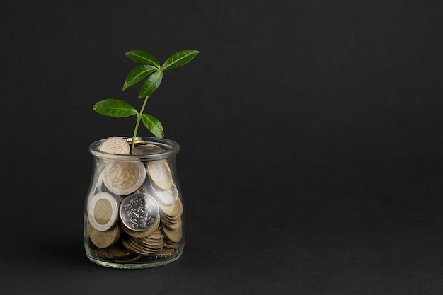 Plant growing out of jar of coins