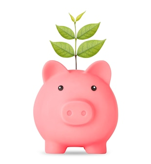 Plant growing on piggy bank on isolated on white