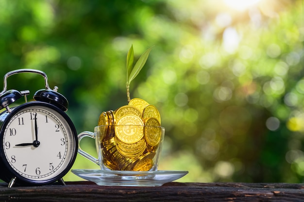 Plant growing in savings coins green bokeh with sun light