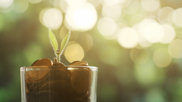 Plant growing in savings coins