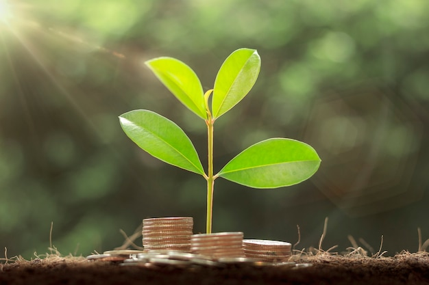 Plant growing step on coins. concept finance and accounting. the coins are stacked on the ground and the seedlings are growing on top. saving money and financial and business growth concept.