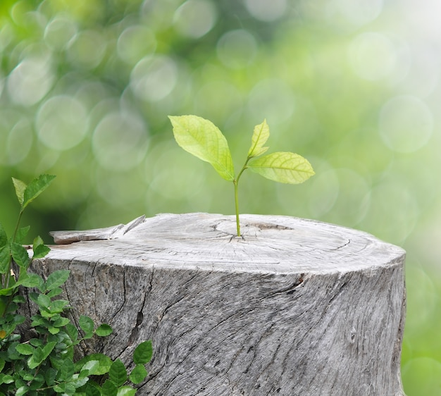 Plant growing on timber on green bokeh background , ecology concept