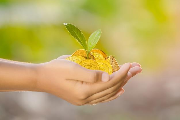 자연 배경에 금화를 들고 손에 자라는 식물