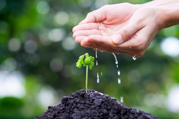 Plant growing with hand watering on soil  and sunlight and green bokeh background