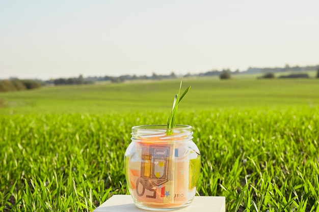 Plant grows from glass piggy bank with cash banknotes.