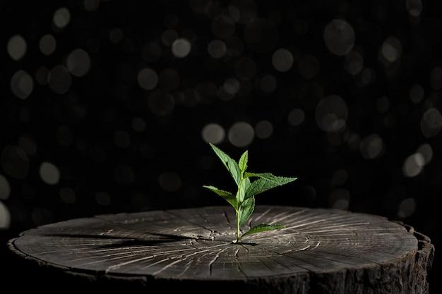 植物は黒の背景に木の中で育つ