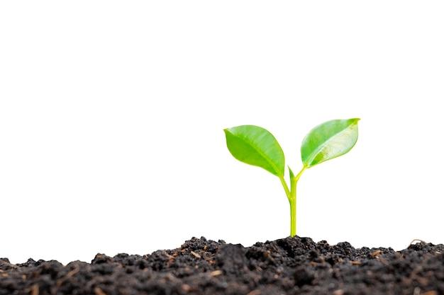 클리핑 패스와 함께 배경에 토양에서 자라는 나무와 식물 성장 개념.