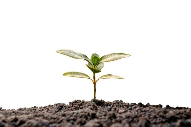 흰색 바탕에 토양에서 자라는 나무와 식물 성장 개념.