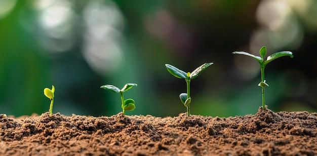 緑の葉を持つ農場での植物の成長。農業植物播種成長ステップの概念