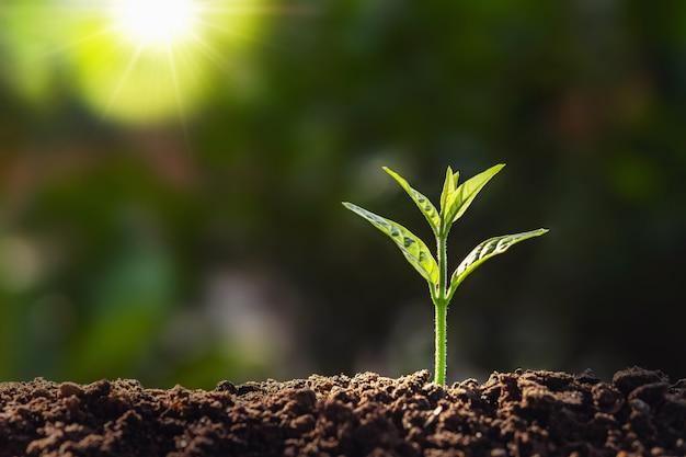 日光の背景を持つ農場での植物の成長
